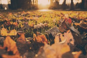 Preparing your lawn for winter.
