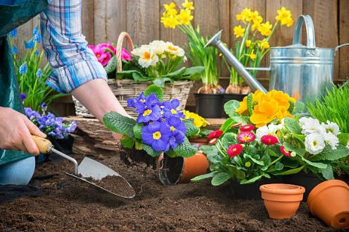 Early Spring Planting Ideas